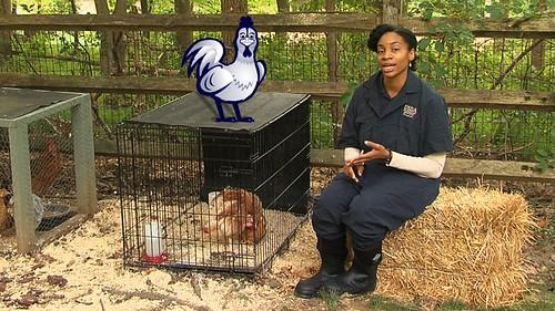 Usda Poultry Inspection