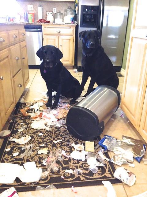Trash Dogs Flickr Photo Sharing