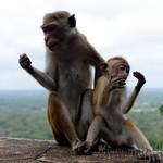 05 Viajefilos en Sri Lanka. Sigiriya 07