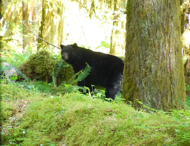 Bear #1 - Grumpy Bear