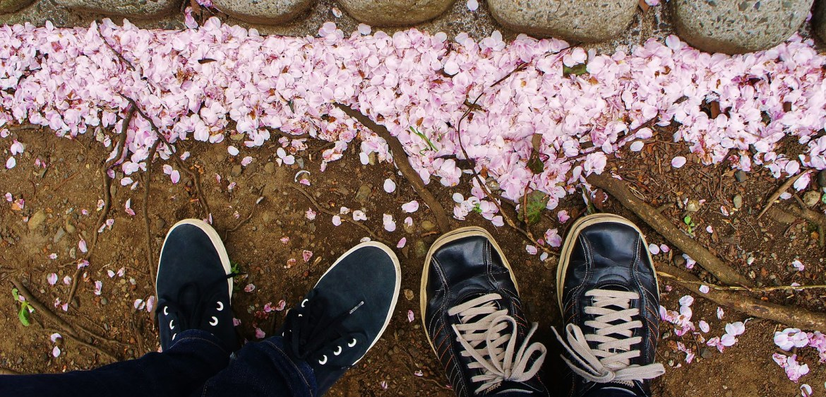 "Sakura ""fallen"" Petals at our feet"