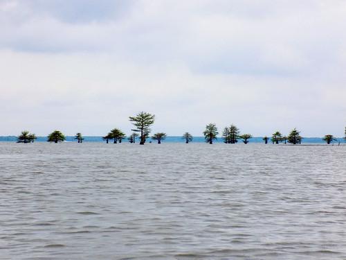 Lake Marion Plantation Islands-013