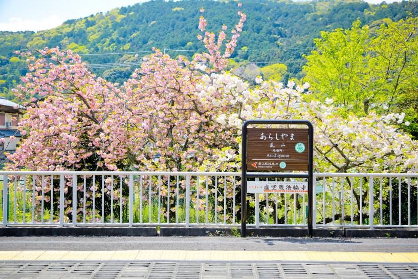 2015 April 京都嵐山 315