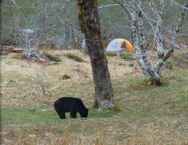 Enchanted Valley Bear #2