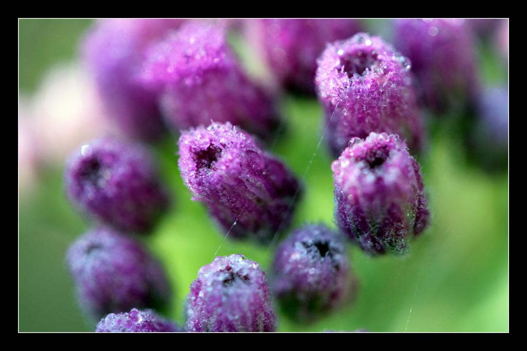Imagen gratis de unas flores moradas