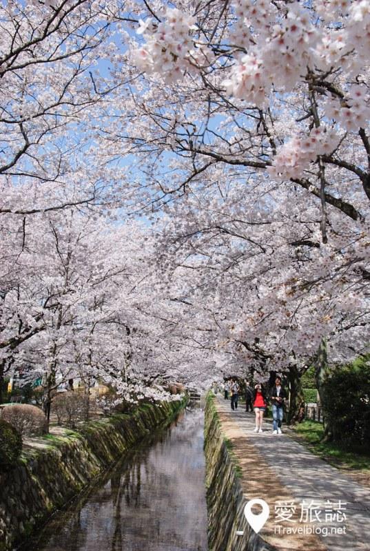 京都赏樱景点 哲学之道 06