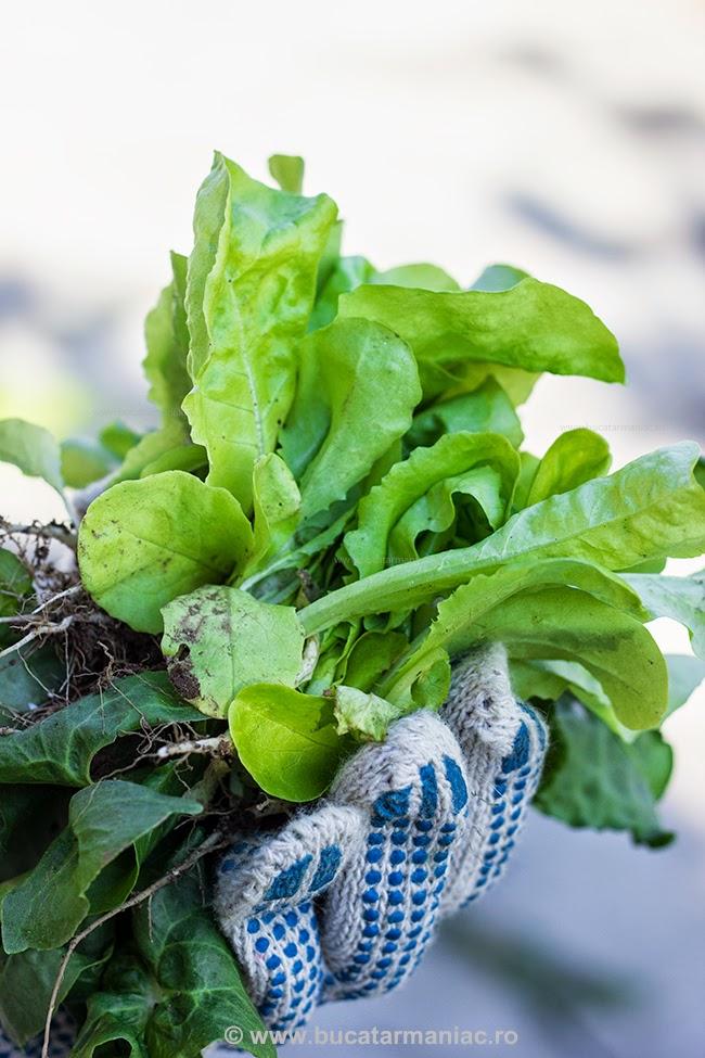 ciorba de salata 1