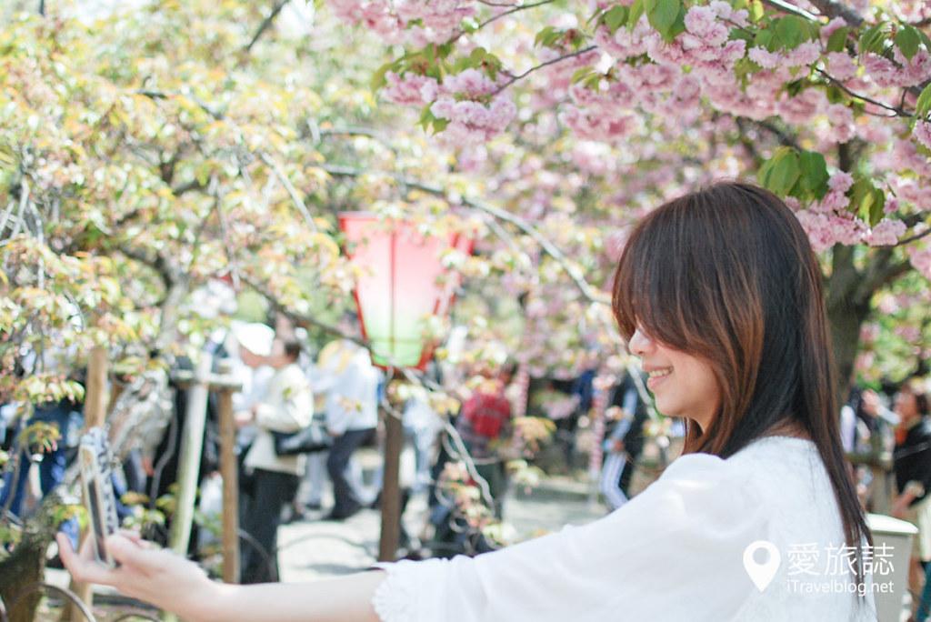 大阪造币局 樱花 34