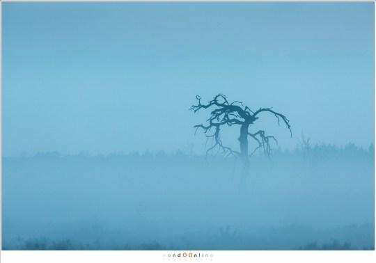 Mijn boom in de mist