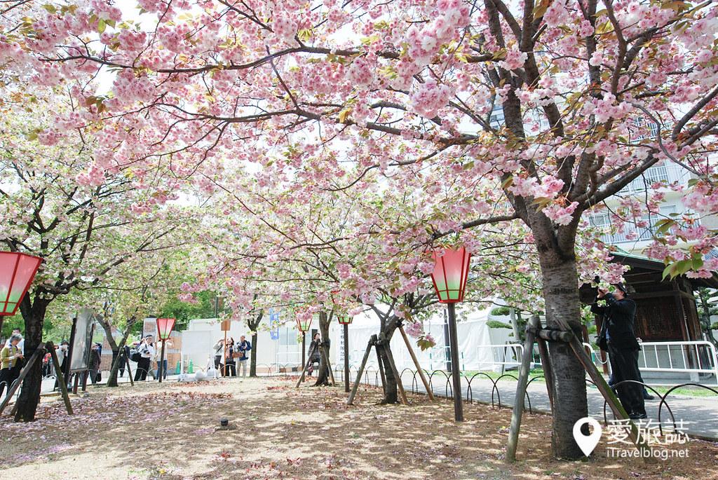大阪造币局 樱花 19