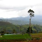 13 Viajefilos en Sri Lanka. Tren a Ella 35