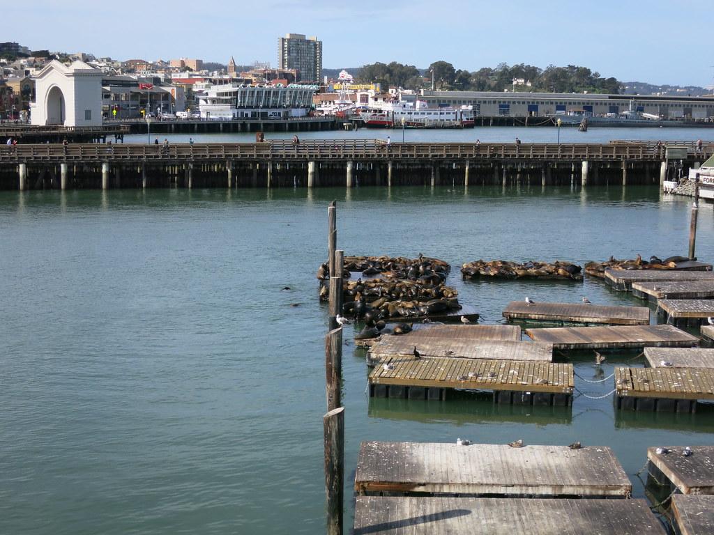 Pier 39 Sea Lions on dock