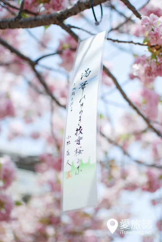 大阪造币局 樱花 38