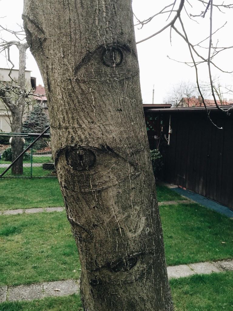 Mystery Monster Tree (4/12/15)