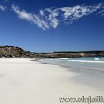 Viajefilos en Australia. Kangaroo 67