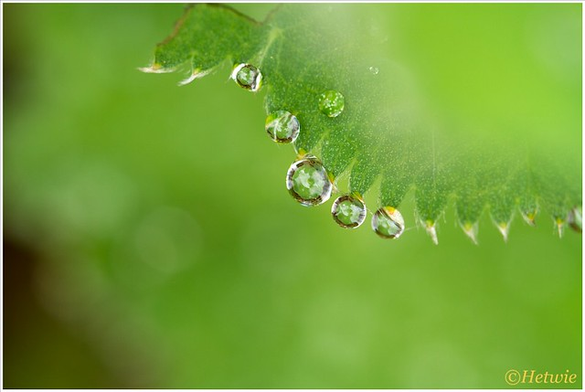 raindrops (7D026644)