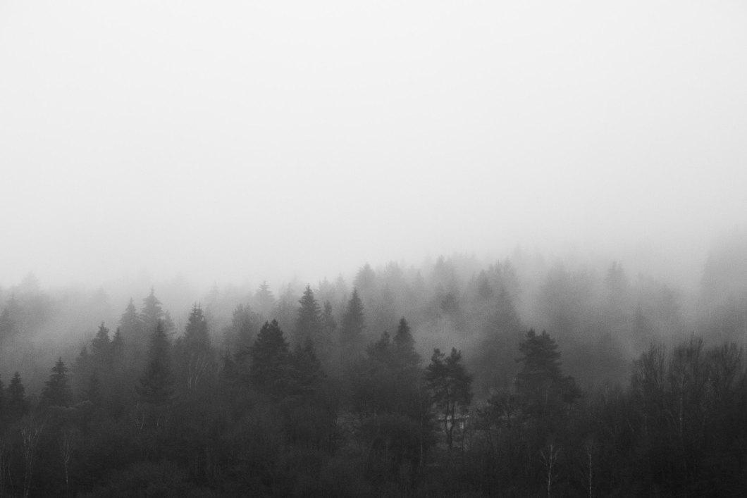 Imagen gratis de un bosque en blanco y negro cubierto de niebla