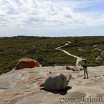 Viajefilos en Australia. Kangaroo 56
