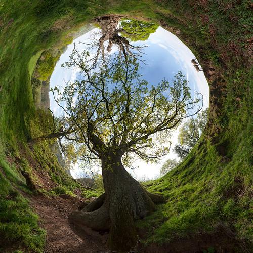 Tree, Malverns