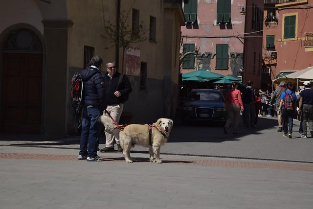dog_cinqueterre