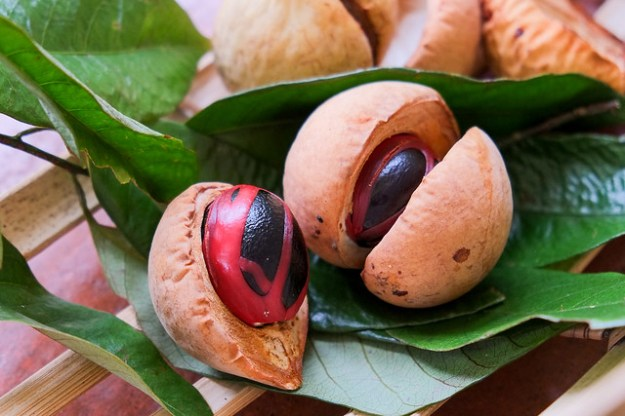 Nutmeg fruits. Bandaneira