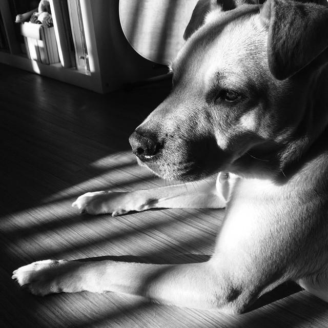 sun_dog