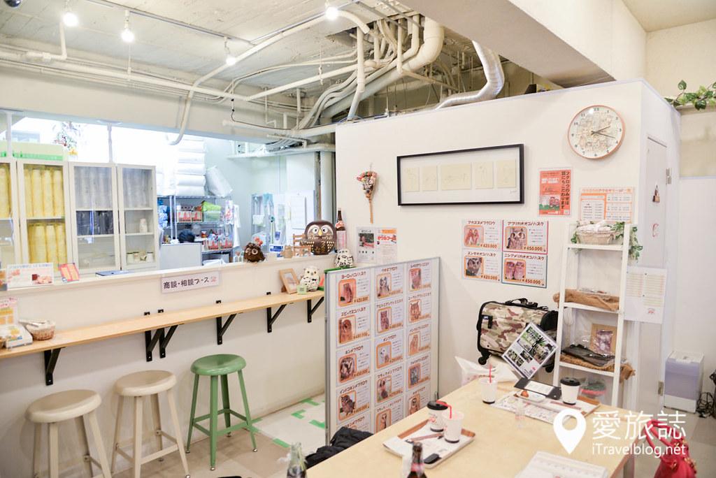《大阪景点推介》OWL Family猫头鹰咖啡厅:一小时亲密接触