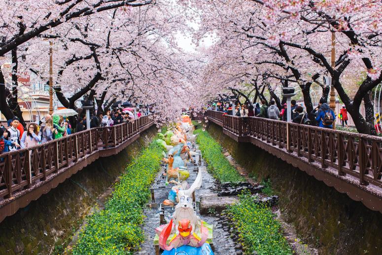 JINHAE // Cherry Blossom Festival