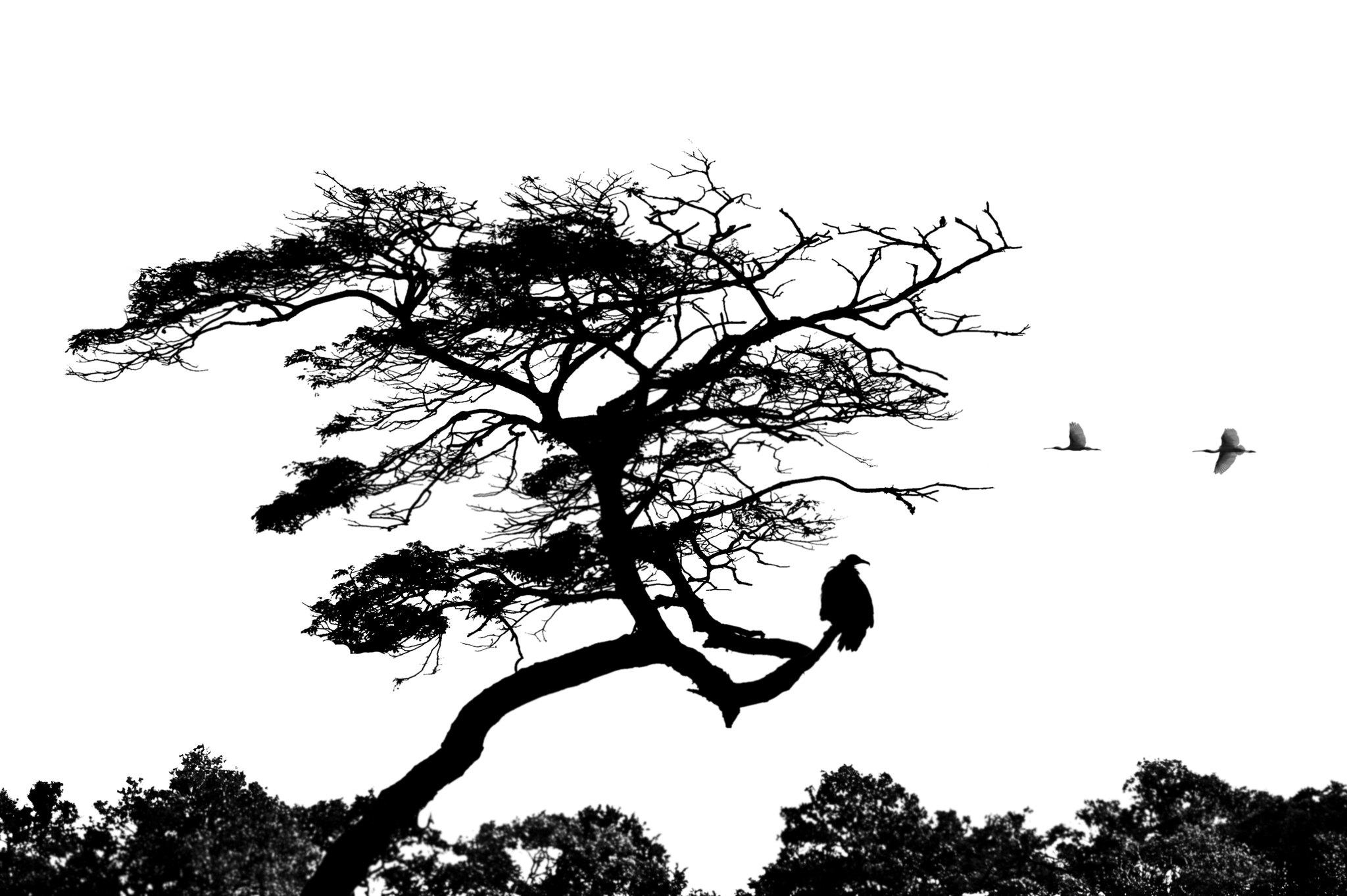Tree Silhouette With Birds