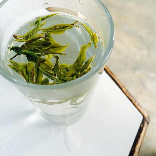 Свежий чай – каждый день