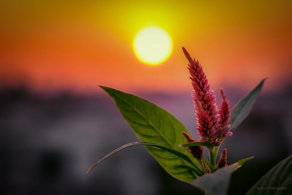 Imagen gratis de una flor con el sol de fondo