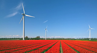 Wind turbines and tulips