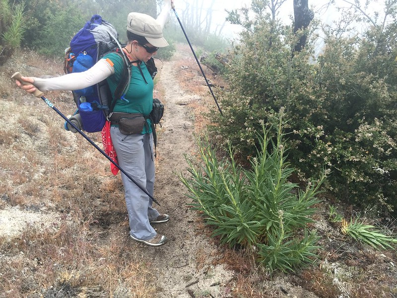 PCT Day 32