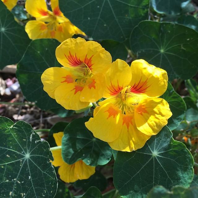 100daysflowers03