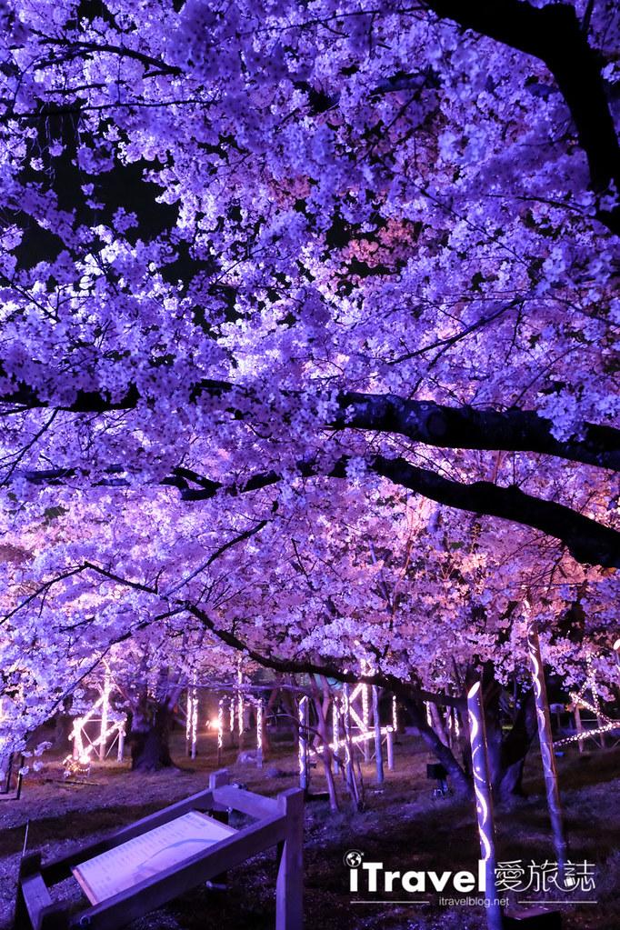 賞櫻景點 福岡城夜櫻 (79)