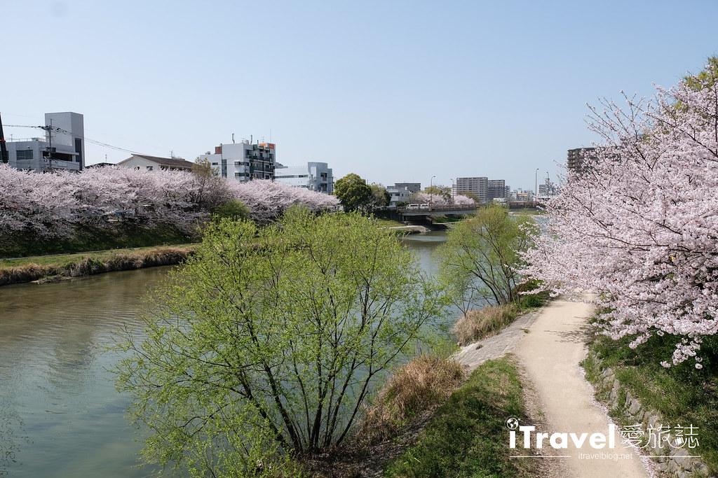 福岡賞櫻景點 美野島南公園 (14)