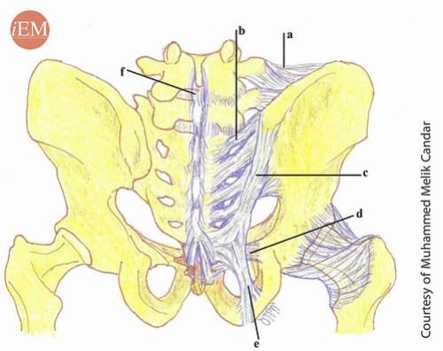 789 - figure 4 pelvic ligaments