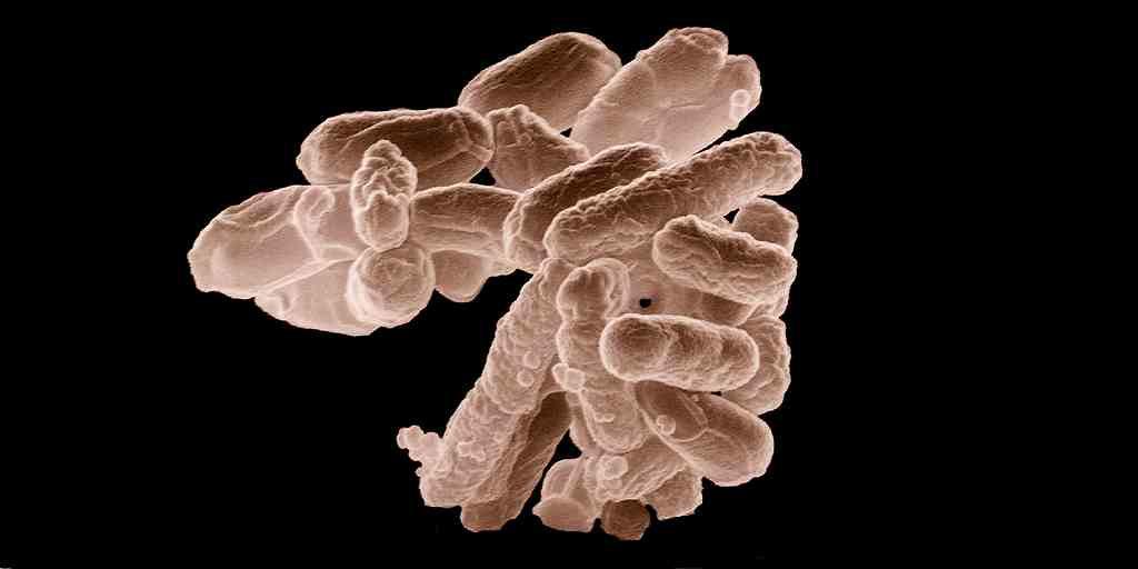 les-phages-bactérie-intestions