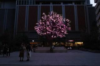 Nihonbashi Sakura Festival 2019