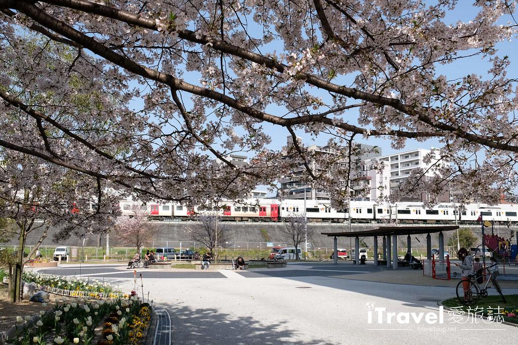 福岡賞櫻景點 美野島公園、東領公園 (35)