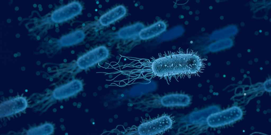 bactérie-stratégie-contre-antibiotiques