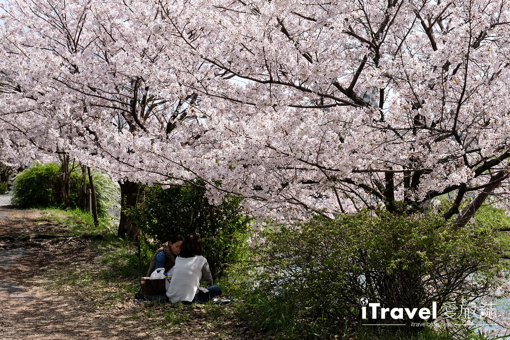 福岡賞櫻景點 美野島南公園 (9)