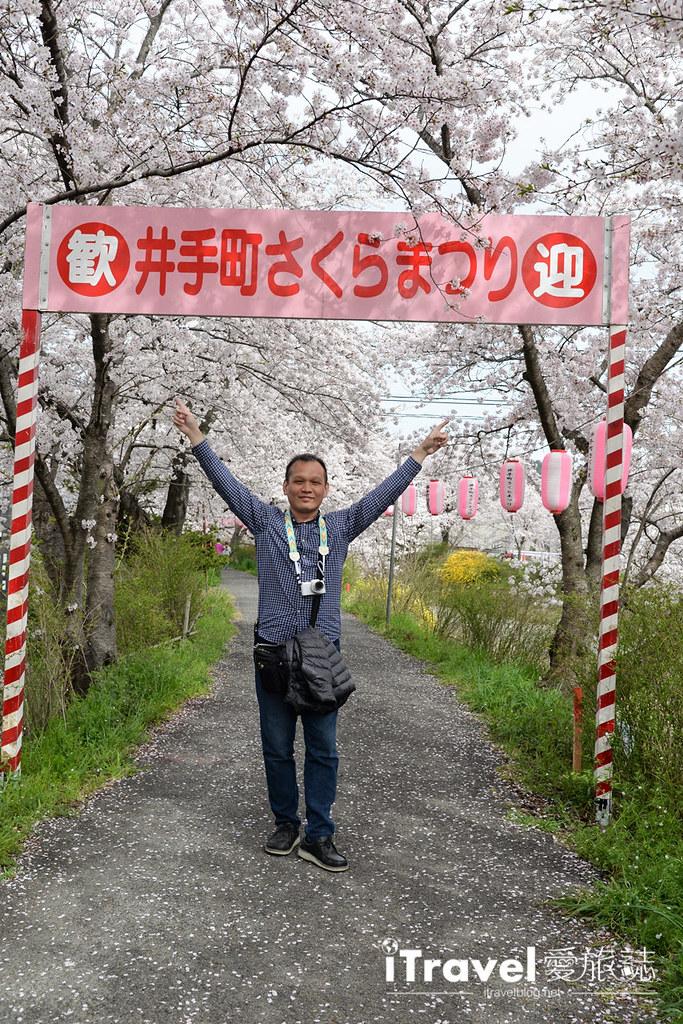 京都賞櫻景點 井手町玉川堤 (33)