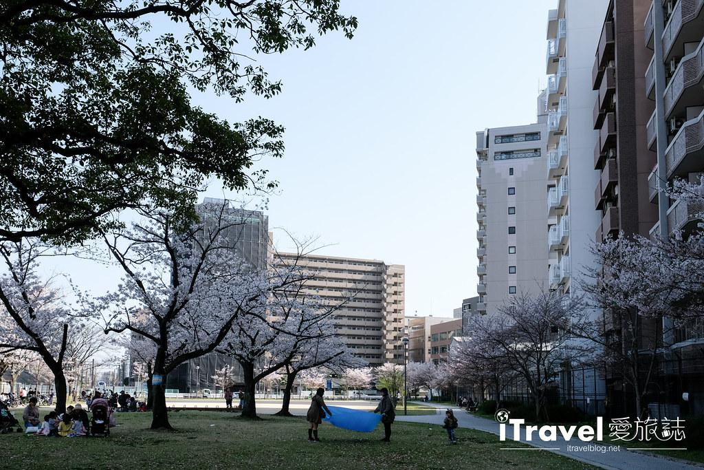 福岡賞櫻景點 美野島公園、東領公園 (31)
