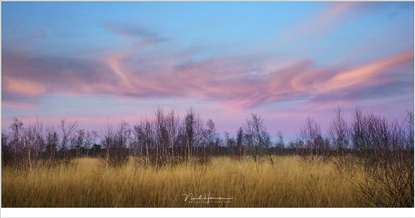 Avondschemering in de Groote Peel. (Sony A7R III + FE24-70ZA @ 53mm | ISO500 | f/8 | 1/125)