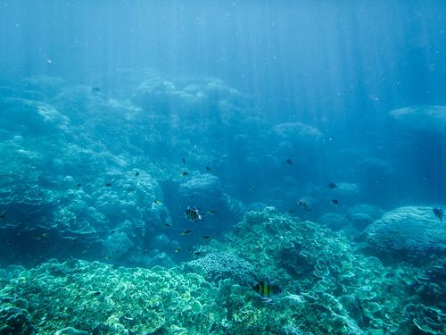 Snorkeling near natural arch, Rock Islands, Palau