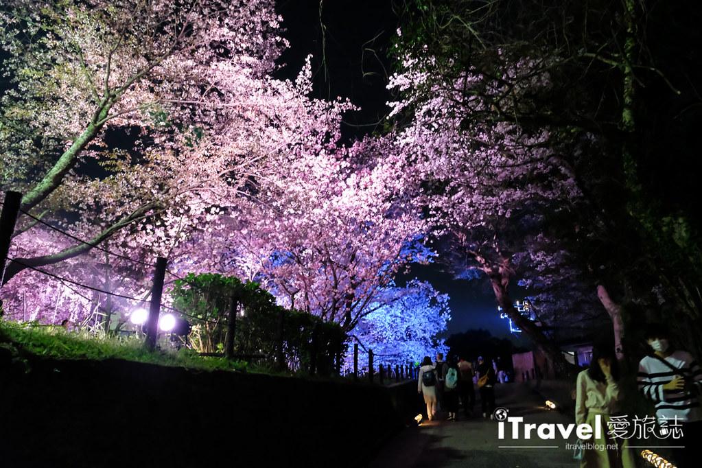 賞櫻景點 福岡城夜櫻 (61)
