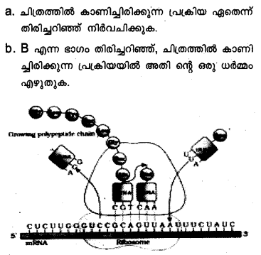 Plus Two Zoology Model Question Papers Paper 3.18