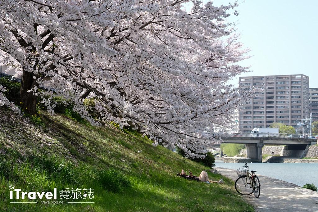 福岡賞櫻景點 美野島南公園 (46)