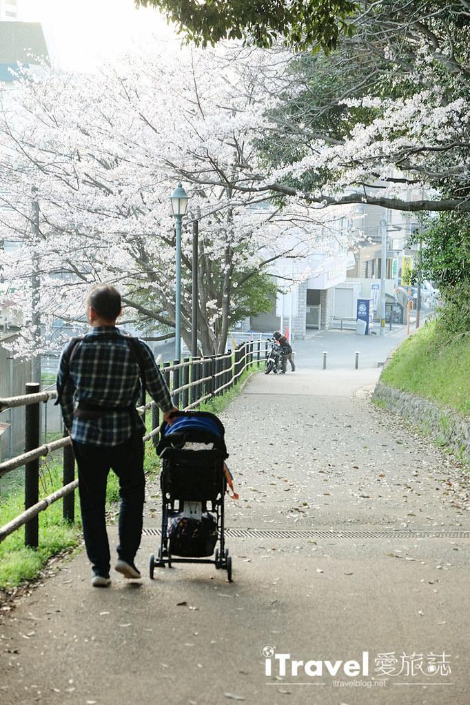 福岡賞櫻景點 西公園Nishi Park (64)